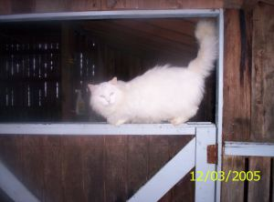 Mooney my house cat when he was a young stray on my farm.
