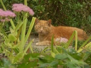 tabby-ginger-cat5
